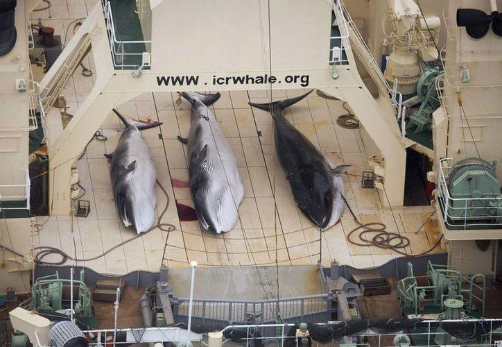 Fotografía del pasado 7 de enero de 2013 que muestra al pesquero de ballenas japonés Nisshin Maru tras cazar tres ejemplares en el Océano Austral, cerca de Australia. (EFE)