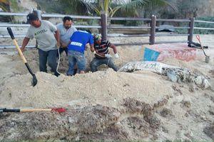 Recala otro delfín en Progreso