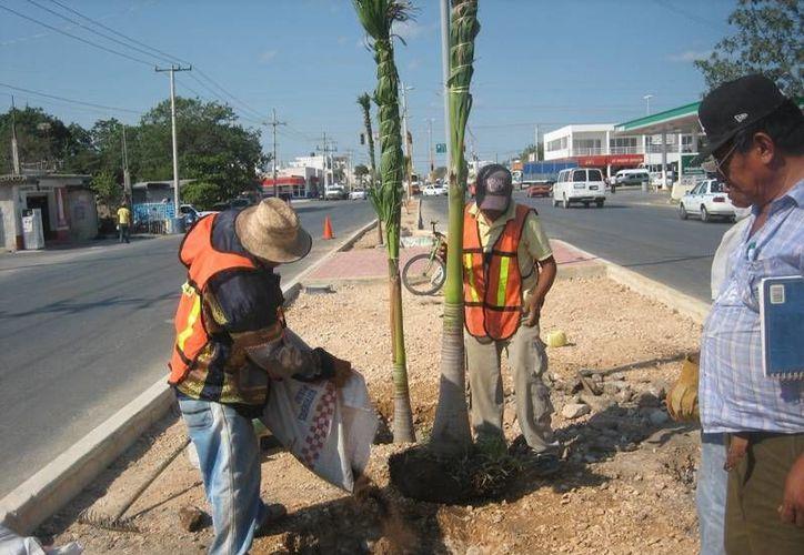 Trabajadores no han recibido su salario de la quincena pasada. (Adrián Barreto/SIPSE)