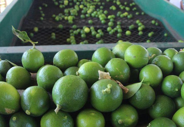 En mercados de Puebla se cotiza el limón hasta en 10 pesos el kilo. (Archiva/SIPSE)