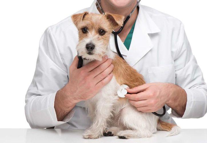Dos días o más sin comer es una clara señal de que tu mascota debe ir al veterinario. (Foto: Contexto/Internet)