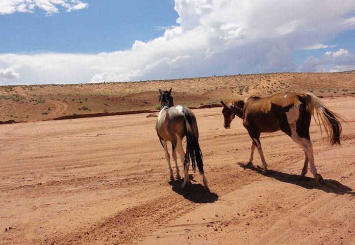 Autoridades aseguran que el sacrificio de los equinos es la solución correcta. (Agencias)