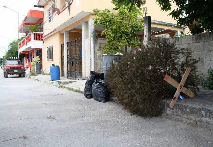 El Ayuntamiento de Solidaridad instalará centros de acopio para los árboles de Navidad. (Octavio Martínez/SIPSE)