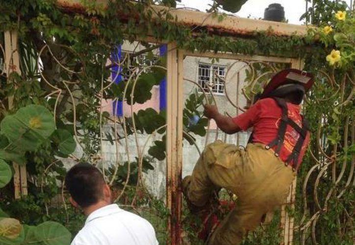 Los bomberos realizaron maniobras para liberar al perro. (Facebook/evelyne.ayudaanimales)