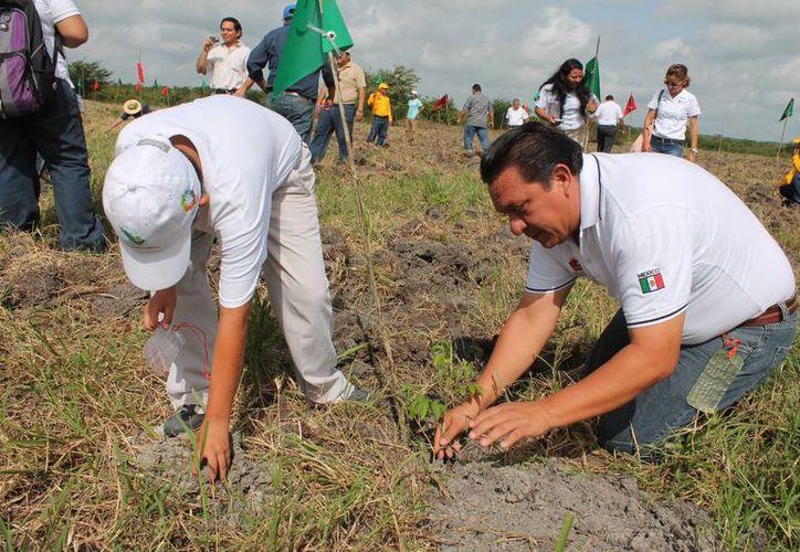 La jornada de reforestación reunió a más de 100 voluntarios, entre adultos e infantes. (Edgardo Rodríguez/SIPSE)