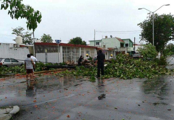 En el fraccionamiento Pensiones un árbol cayó a causa de la lluvia. (Twitter: J.A.U.Fuentes)