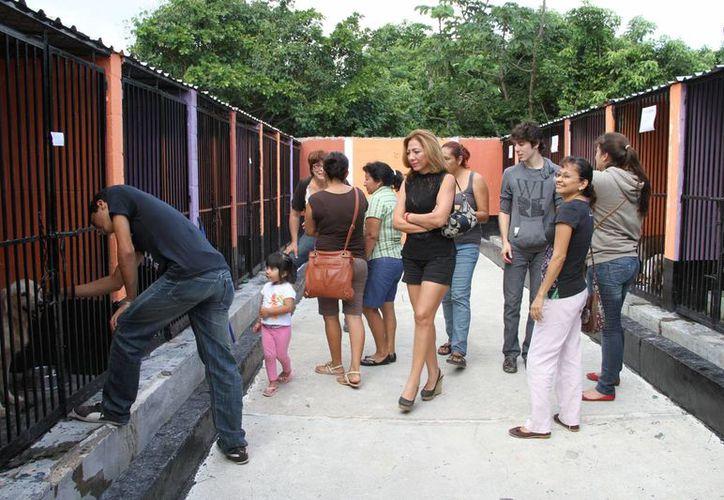Decenas de cancunenses visitaron las instalaciones del CAC. (Tomás Álvarez/SIPSE)