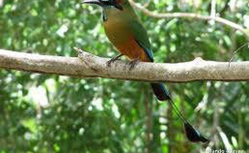 En el ejido Noh-bec se pueden llegar a ver diferentes especies de aves. (Contexto/Internet)