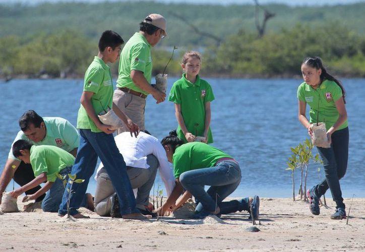 El grupo Jóvenes por la Conservación lleva más de una década realizando labores medioambientales en Cozumel. (Gustavo Villegas/SIPSE)