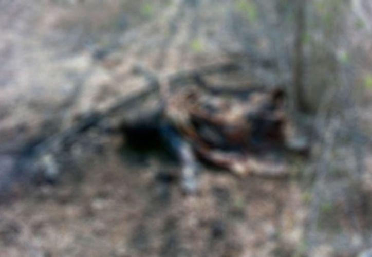 Un leñador encontró una cadáver, en montes Umán, Yucatán. Se desconoce la identidad de la víctima.  (Milenio Novedades)
