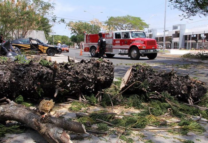 En la avenida Campestre por calle 1-A el viento provocó la caída de un árbol. (José Acosta/SIPSE)
