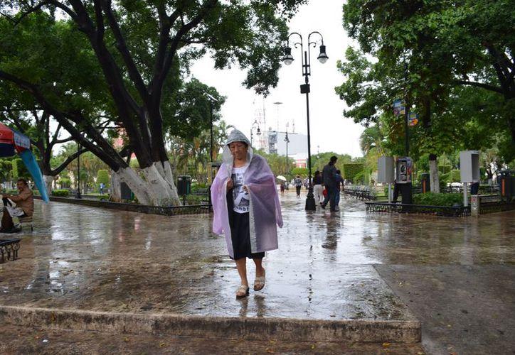 Las recientes lluvias podrían hacer repuntar los casos de dengue. (Theani Ruz/SIPSE)