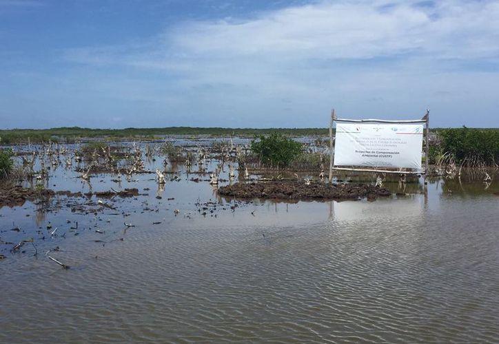 Los recursos del Fondo de Compensación Ambiental para Q. Roo ascendieron a 59 millones de pesos. (Stephani Blanco/SIPSE)