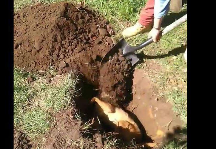 Las personas que enterraron al can aseguran que quería evitar un foco de infección. (Foto: Captura)