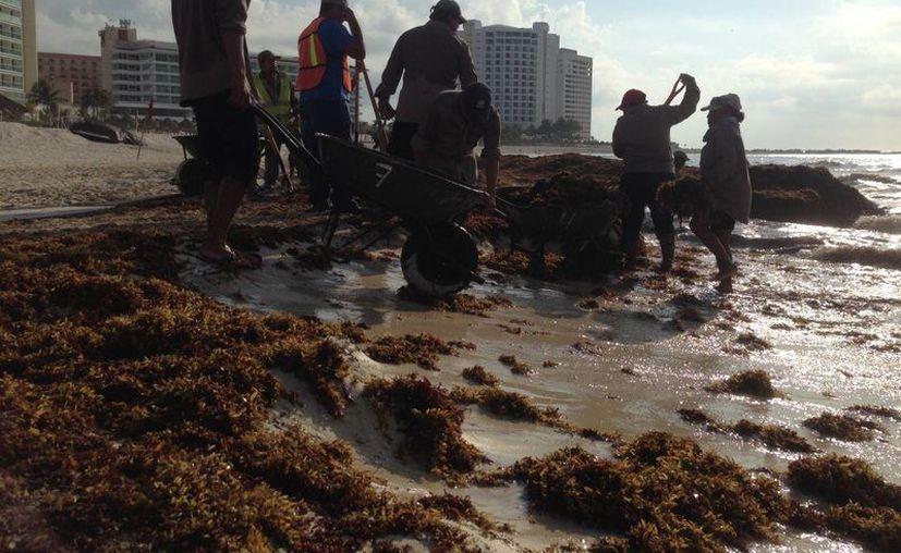 En playa Gaviota Azul es donde se concentra mayor cantidad de sargazo. (Israel Leal/SIPSE)