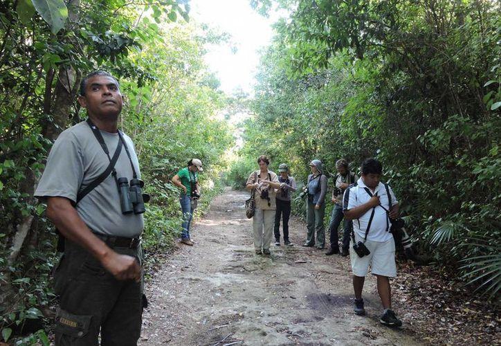 """Del 7 al 9 de noviembre se realizará el """"Sexto Festival de las Aves"""" en Cozumel.  (Irving Canul/SIPSE)"""