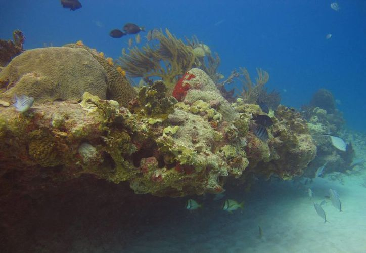La delimitación de Reserva de la Biósfera Caribe Mexicano podría afectar a la zona arrecifal. (Adrián Barreto/SIPSE)