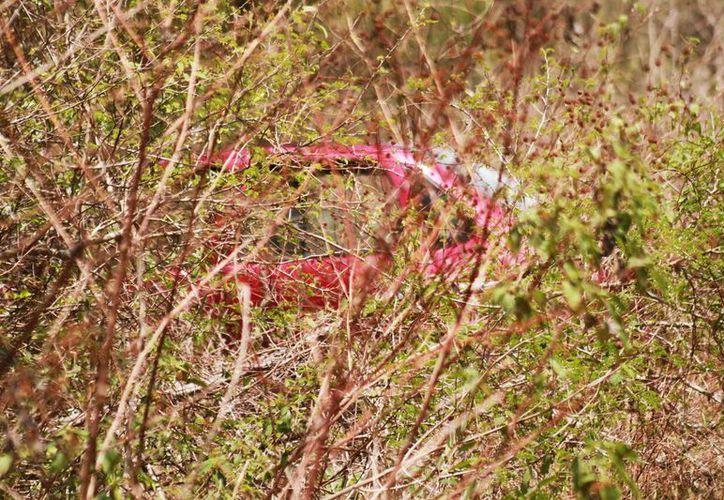 El Chevy rojo de las 'victimas' fue encontrado dentro de la maleza, cerca del lugar donde sucedió el supuesto asalto. (Jorge Acosta/Milenio Novedades)