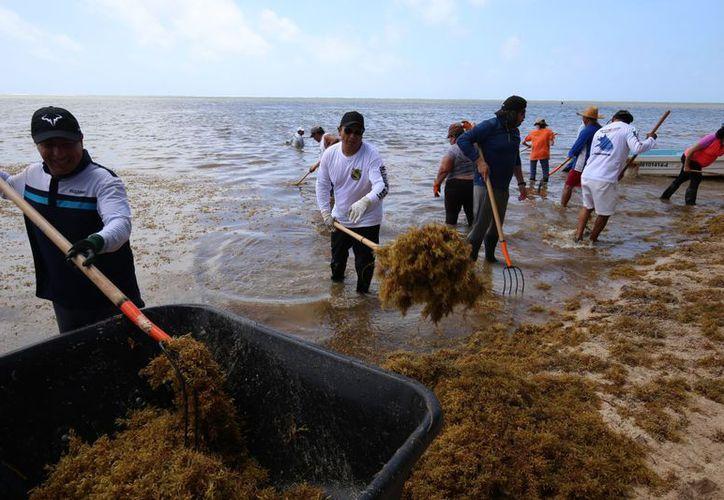 """La sociedad civil se ha sumado a las acciones de limpieza de playas en un solo frente """"Unidos por Quintana Roo"""", con más de 22 brigadas con la participación de cerca de tres mil personas. (Redacción/SIPSE)"""
