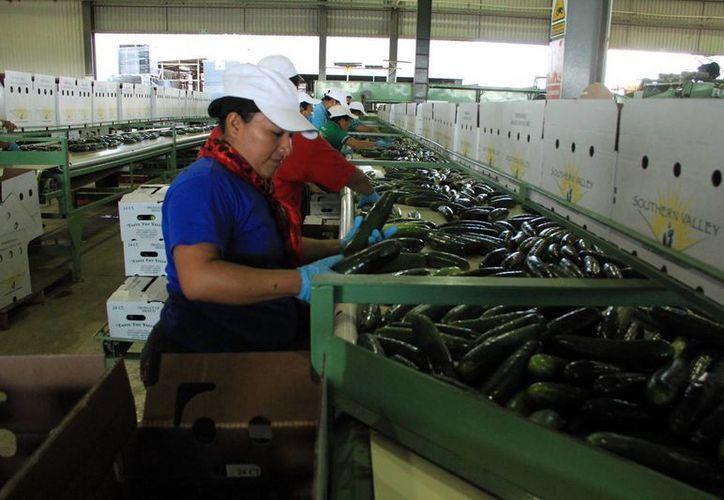 Buena parte de los productos yucatecos que son exportados tienen como destino Estados Unidos. (Milenio Novedades)