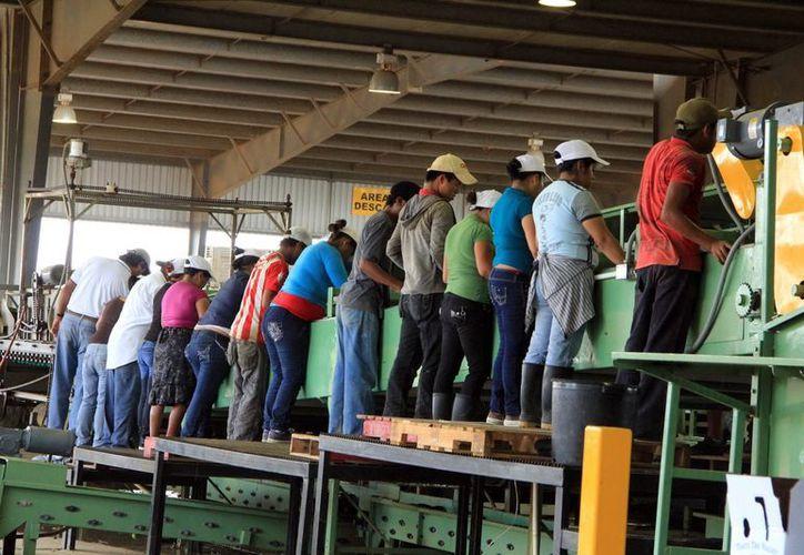 Maquila de joyas y agroindustria serían de las principales este año en Yucatán. (José Acosta/SIPSE)