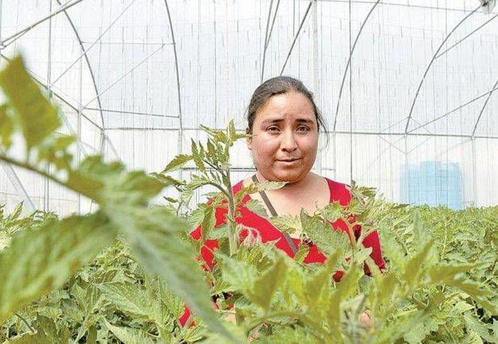 Teresa González administra un invernadero para no tener que pedir trabajo en otro lugar. (Milenio)