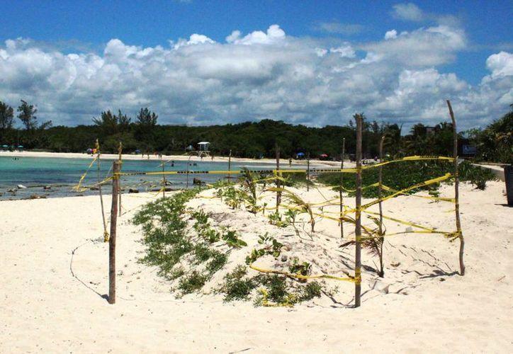 La Zofemat delimitó un área de la playa de Punta Esmeralda para proteger vegetación recién sembrada. (Octavio Martínez/SIPSE)