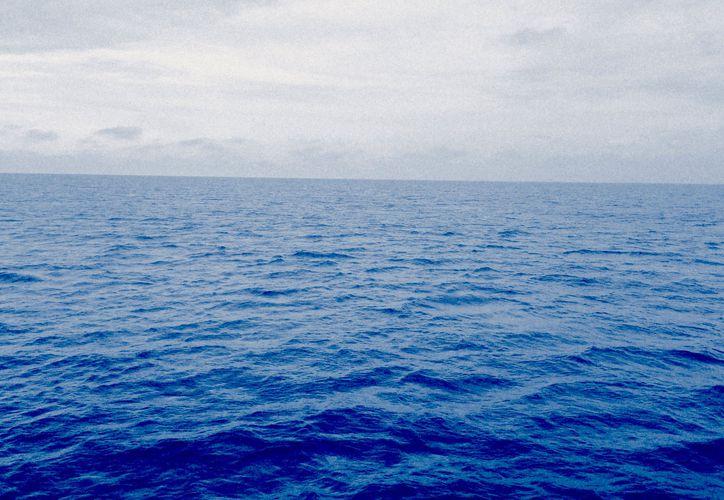 Además de la gran cantidad de plastico encontrado, el explorador descubrió nuevas especies marinas. (Pexels/ Imagen ilustrativa)