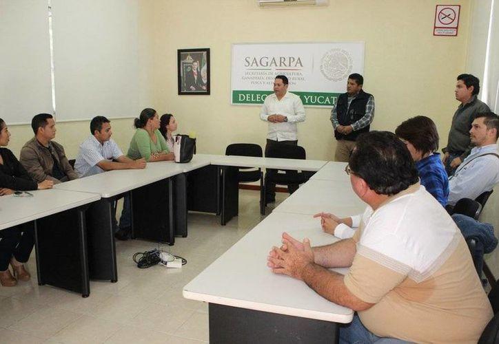 Pablo Castro Alcocer, delegado de Sagarpa en Yucatán dijo que en los próximos días se realizará un censo para conocer la situación que guardan poco más de 13 mil apicultores yucatecos, para que se les apoye. (@SAGARPA_Yucatan)