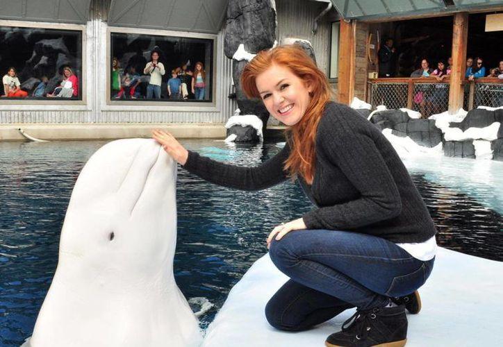 Nanuq se encontraba en el Sea World de Orlando en préstamo del acuario de Vancouver, Canadá. (nydailynews.com)