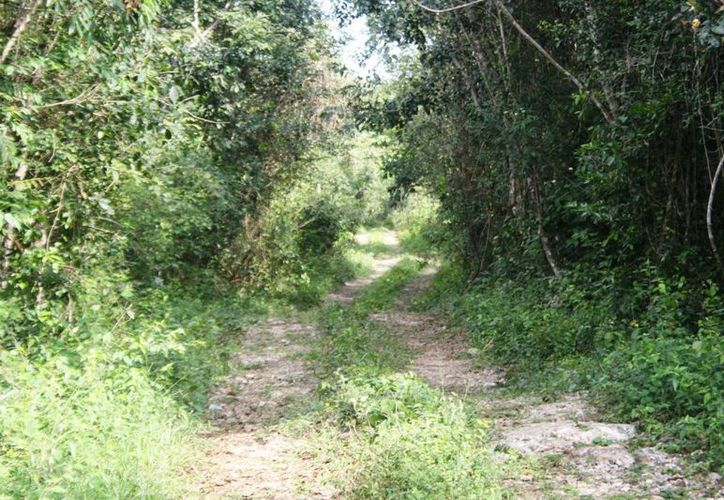 Actualmente los habitantes del ejido Lázaro Cárdenas deben caminar siete kilómetros para llegar a su comunidad.  (Octavio Martínez/SIPSE)