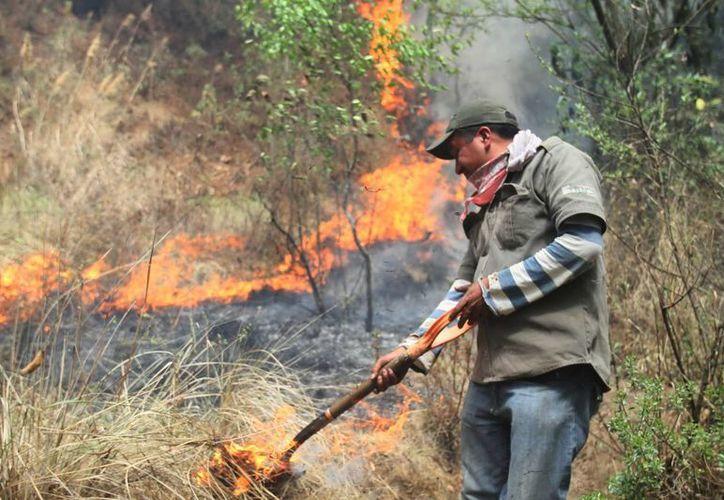 El rancho donde ocurrió la tala y quema forma parte de una reserva protegida. (Notimex/Contexto)