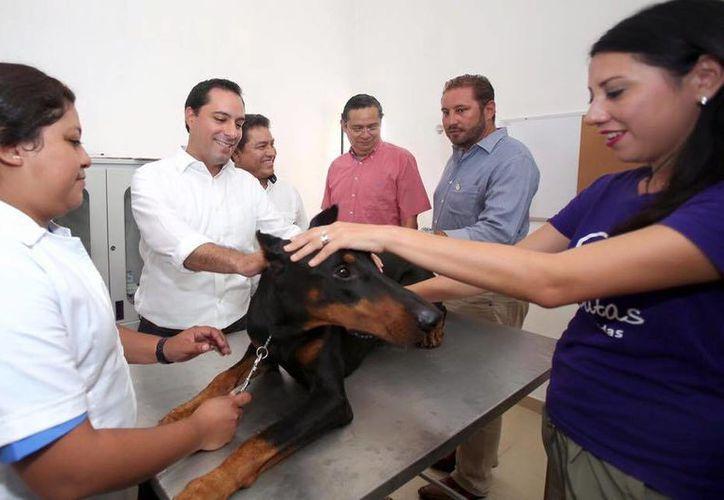 Tras la inauguración, el alcalde recorrió las instalaciones del lugar y presenció la primera consulta de un perro dóberman llamado Ranger. (Cortesía/ Ayuntamiento)