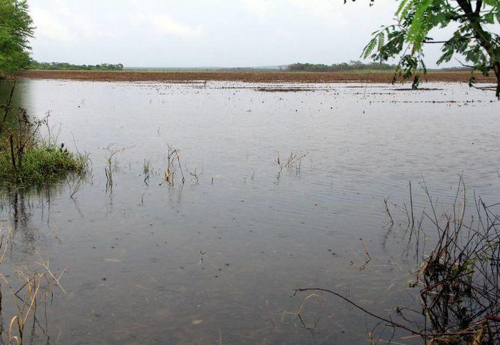 Las partes bajas de Bacalar continúan recibiendo los escurrimientos de agua. (Carlos Horta/SIPSE)