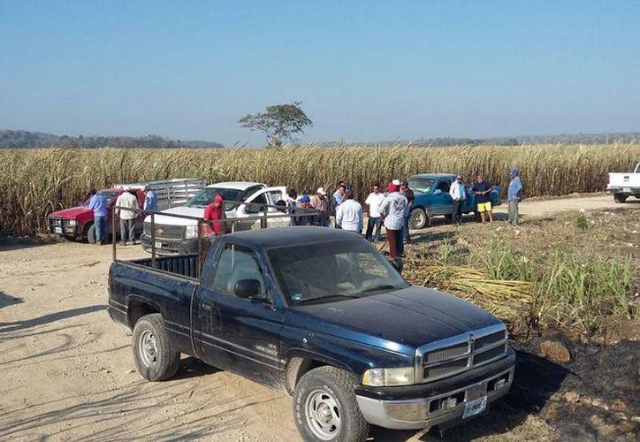 Los cañeros de 14 comunidades esperan el remanente por el millón 300 mil toneladas de vara dulce que se lograron durante los seis meses de zafra. (Carlos Castillo/SIPSE)