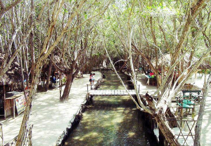 La reserva ecológica ubicada a 36 kilómetros de Mérida, que garantiza a turistas una experiencia inolvidable. (Milenio Novedades)
