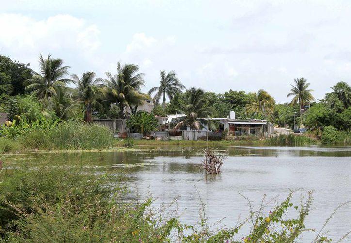 Zona de humedad y manglar, serían de las más afectadas por un aumento en el nivel del mar. (Joel Zamora/SIPSE)
