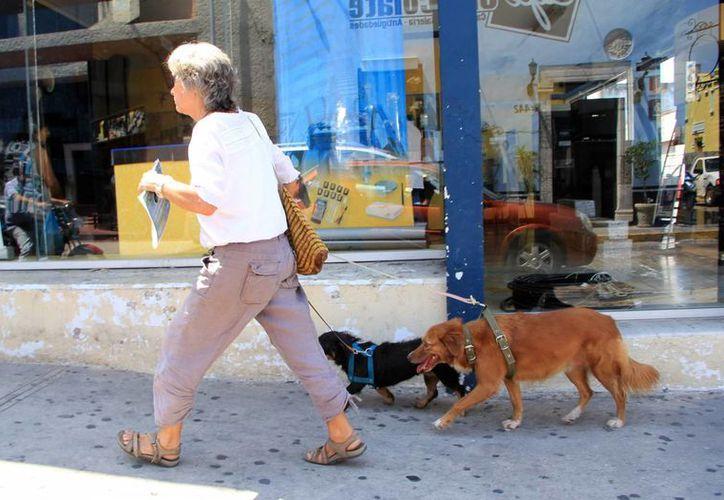 El objetivo es fomentar la adopción de mascotas. (Milenio Novedades)