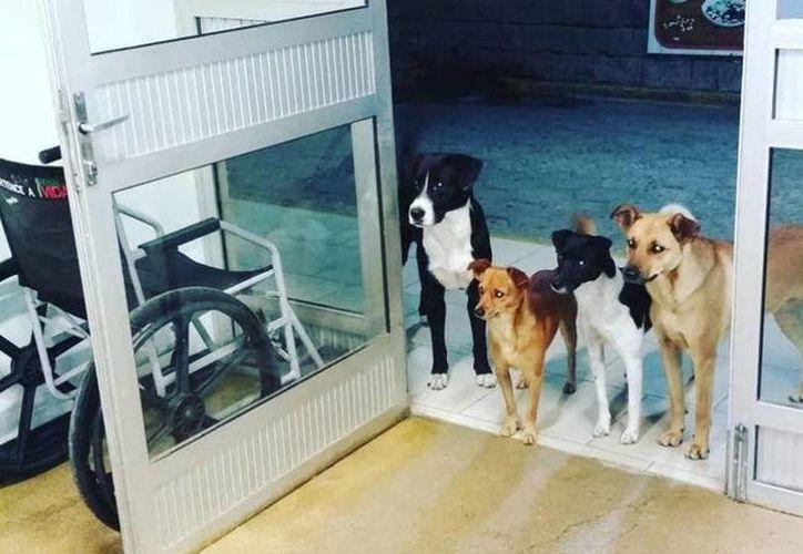 Los cuatro perros, en la puerta de urgencias esperando a su dueño (Foto: Facebook)