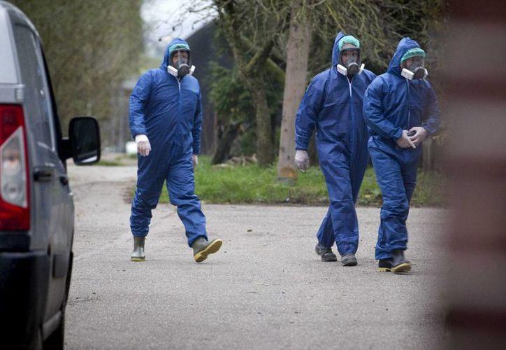 Hasta el momento no se han documentado contagios de los virus H5N2 y H5N8 en humanos. (EFE/Archivo)