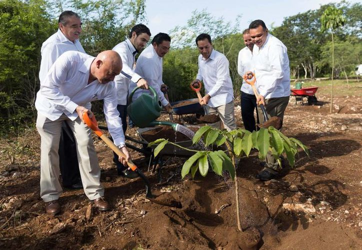 El rector de la UADY, José de Jesús Williams (i), el alcalde Mauricio Vila (c) y el gobernador Rolando Zapata (d) durante la siembra  de un árbol de hule en el marco del 31 aniversario de la autonomía de la UADY. (Foto cortesía del Gobierno de Yucatán)