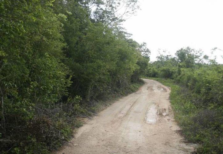 Los proyectos no construidos se tratan de caminos de acceso y saca cosechas. (Redacción)