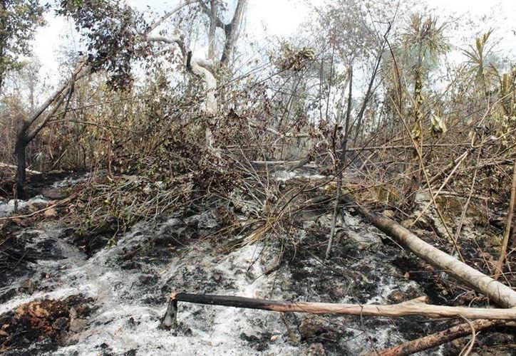 Provocan el fuego para solicitar el cambio de uso de suelo y ello genera daños al medio ambiente. (Edgardo Rodríguez/SIPSE)