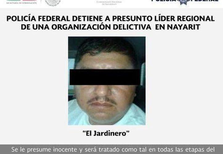 'El Jardinero' es originario de Huetamo, Michoacán, y señalado de encabezar la producción y trasiego de droga en Nayarit para el cártel de Jalisco (Policía Federal)