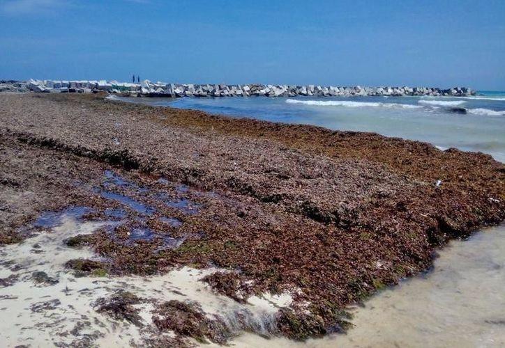 Se atienden diariamente 12 playas públicas de la ciudad. (Archivo/ SIPSE)