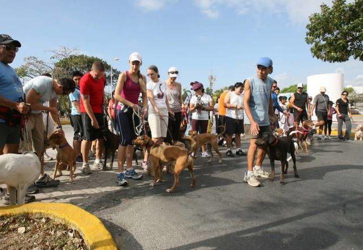 Amos y mascotas correrán 2 kilómetros a beneficio de la Asociación para la Defensa y Protección de los Animales. (Archivo/SIPSE)