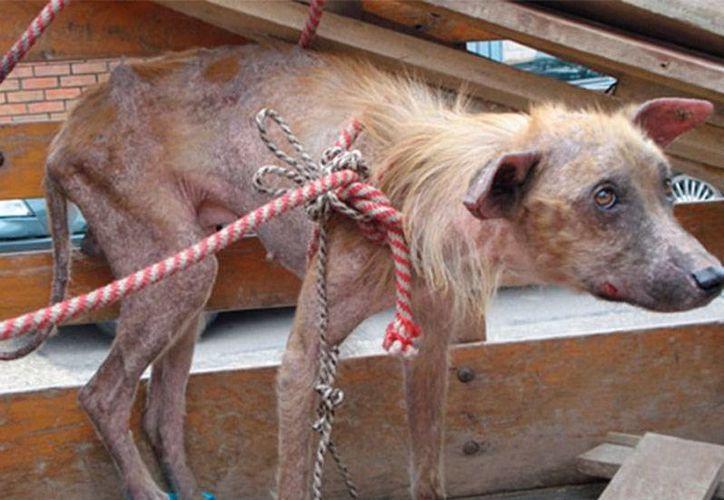 Un hombre de Chihuahua enfrenta un juicio por haber matado a un perro. En caso de ser encontrado culpable, puede purgar pena de entre 6 meses y 2 años de cárcel. (Foto de contexto/excelsior.com.mx)