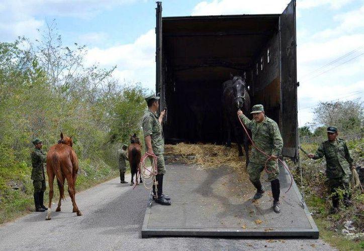 En un camión de la Sedena arribaron los 21 ejemplares a Espita.(Milenio Novedades)
