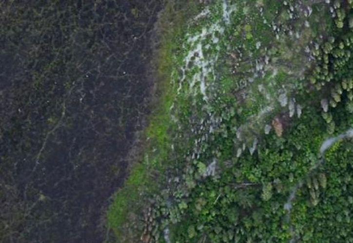 Nadie sabía que existían estos bosques; Google Earth los ubica