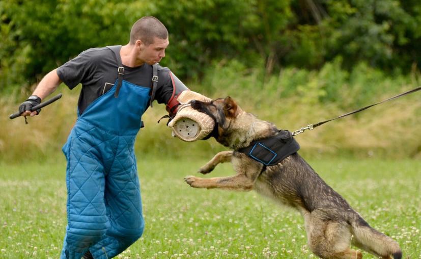 Esta actividad tiene como objetivo valorar la capacidad física y mental de un perro. (Contexto)